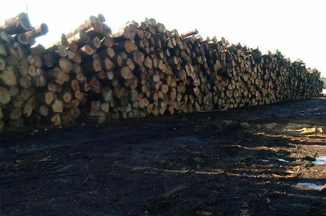 Wilton Wood Products, LLC – IndusTREE Timber